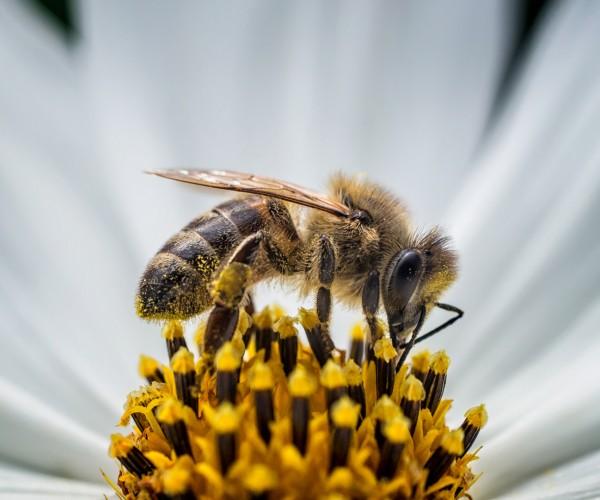 Bee Monitor